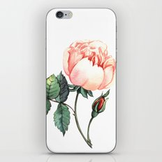 Illustration with watercolor rose iPhone & iPod Skin