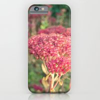 Morning Sunlight iPhone 6 Slim Case