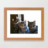 What Are You Looking At? x 3 Framed Art Print