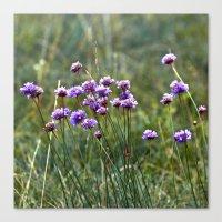 Purple Summer Meadow Canvas Print