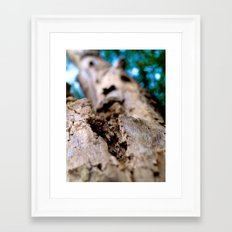 Tree Framed Art Print