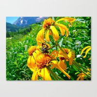 Colorado Butterfly Canvas Print