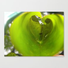 Love in a Lily Canvas Print