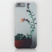 Succulent (1) iPhone 6 Slim Case