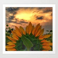 sunflower in the sunset Art Print
