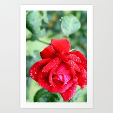 Rose by any other name Art Print