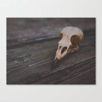 Bird Skull Canvas Print