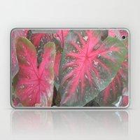 Color me Pink Laptop & iPad Skin
