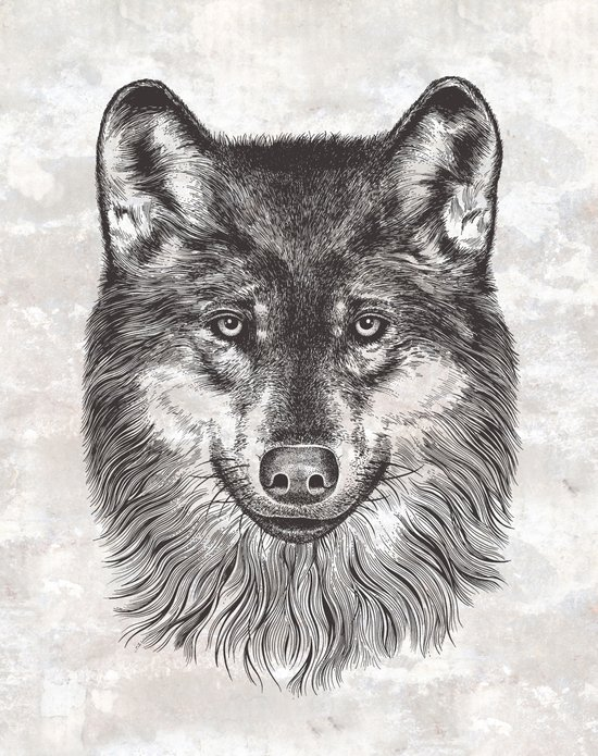Canis Lupus (Gray Wolf) Art Print