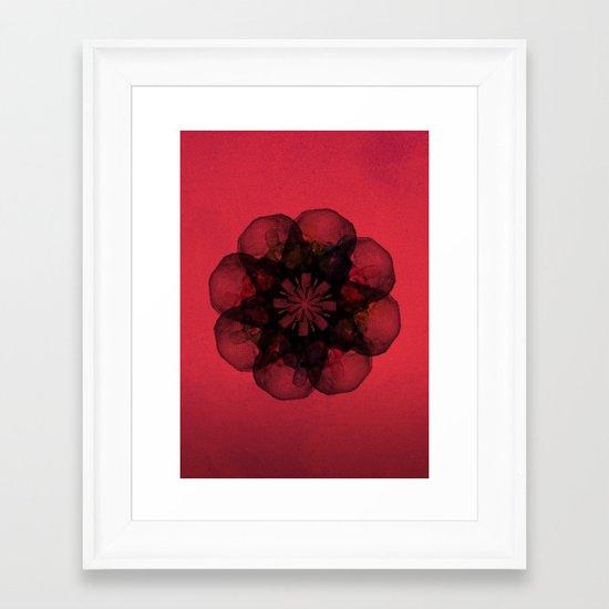 Lilium 'Cameo' Framed Art Print
