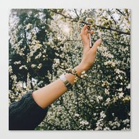 Touch the spring Canvas Print