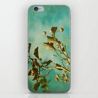 Hawthorne iPhone & iPod Skin