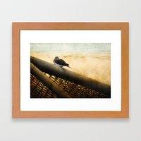 Mourning Dove On Beach Framed Art Print