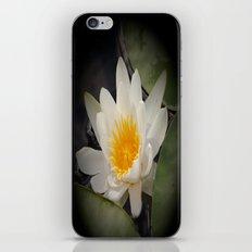 White Waterlily iPhone & iPod Skin