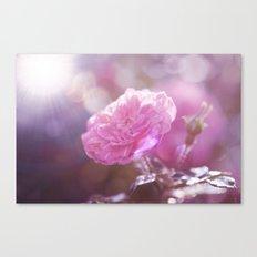 Autumn Roses At Backligh… Canvas Print