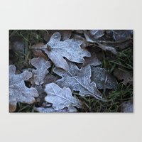 Frost Leaf Canvas Print