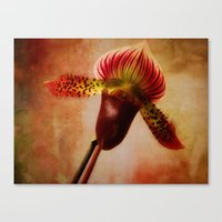 Ruby Lady Slipper Orchid Canvas Print
