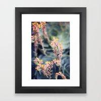 Echeveria #2 Framed Art Print