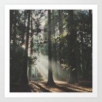 Sunbeam Woods Art Print