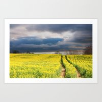 Rapeseed In The Spring Art Print