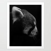 Red Panda Profile Art Print
