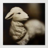 Tom Feiler Lamb Canvas Print