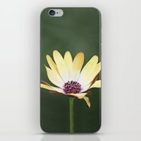 He Loves Me, He Loves Me… iPhone & iPod Skin