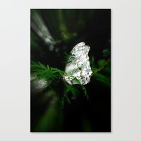 Pretty Tropical Butterfly Canvas Print