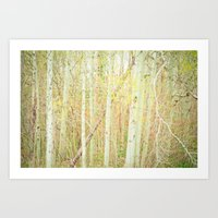 White Birch Trees - Yell… Art Print