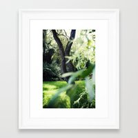 Willow Framed Art Print