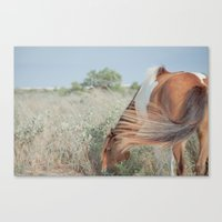 wild horse, assateague Canvas Print
