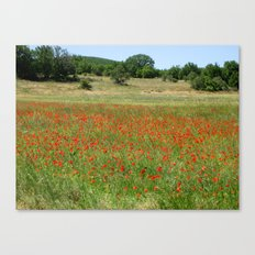 Poppies in Provence, France Canvas Print