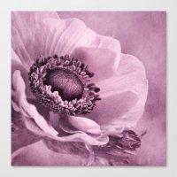 Anemone Rosé Canvas Print