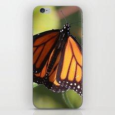 Monarch Butterfly iPhone & iPod Skin