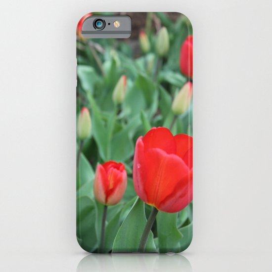 Tulip Darlings iPhone & iPod Case