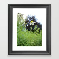 Lonely Flower Framed Art Print