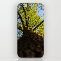 Upward to the canopy iPhone & iPod Skin