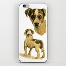Jack Russel terrier SK080 iPhone & iPod Skin