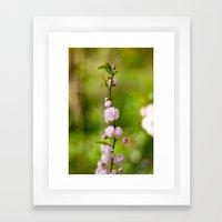 Flowering Almond Blossoms Framed Art Print