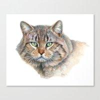 Street Cat portrait CC1402 Canvas Print