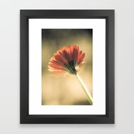 Reddish Gerbera Framed Art Print
