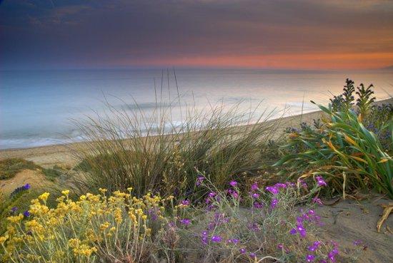 Seaside flowers Art Print