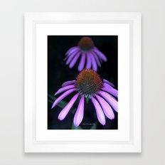 Cone Flower Framed Art Print