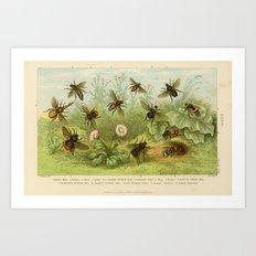 Vintage Bee Print Art Print