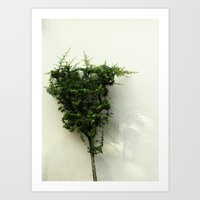 Fresh Green Tree Topiary Minimal White background Nature photography Art Print