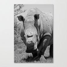 Hornless Canvas Print