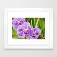 Purple Orchids Framed Art Print