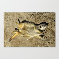 MM - Relaxing meerkat Canvas Print