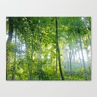 MM - Sunny Forest Canvas Print