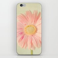 Gerbera Daisy iPhone & iPod Skin